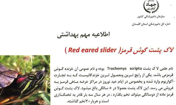 لاکپشت گوش قرمز-Red eared slider